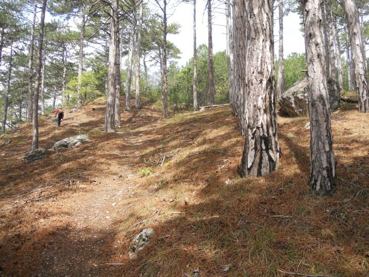 Лес сухой и светлый, идти по нему одно удовольствие