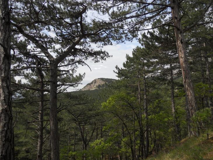 В лесу Ай-Петри