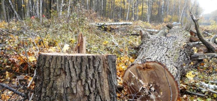 S.O.S. Бутовский лес — быть или не быть ?