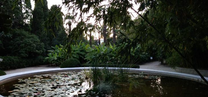 Крымские зарисовки. Никитский ботанический сад